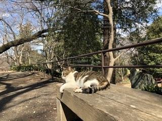 公園のベンチに横になっている猫の写真・画像素材[1832635]