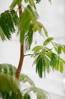 近くの植物のアップの写真・画像素材[1699076]