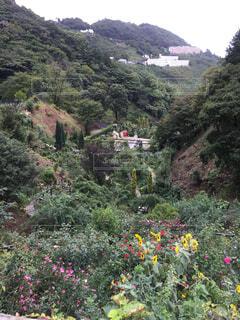背景の山の茂みのグループの写真・画像素材[1699921]