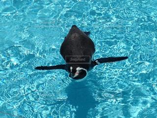 水のプールで泳ぐ魚の写真・画像素材[1700600]