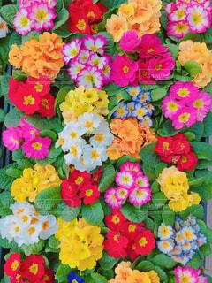 市場のお花の1ダースの写真・画像素材[1700345]