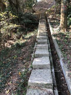森の中の階段の写真・画像素材[1700350]