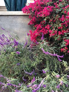 道の壁の花 オシャレな咲き方の写真・画像素材[1704393]