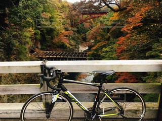 サイクリングの写真・画像素材[1700603]