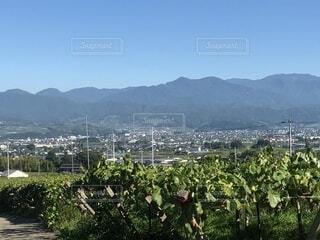 背景の山と木の写真・画像素材[1701149]