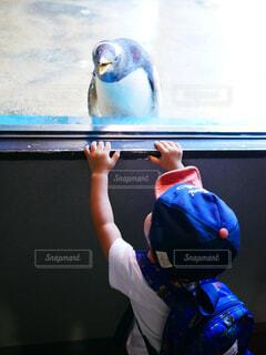 ペンギンを見ている子供の写真・画像素材[1705068]