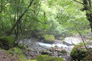森を流れる川の写真・画像素材[1702645]