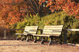 公園のベンチに座っている人の写真・画像素材[1702646]
