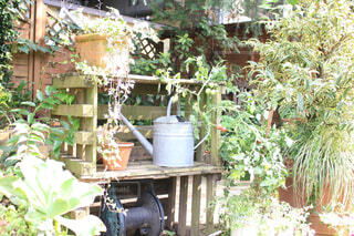 庭の植物の写真・画像素材[1703710]