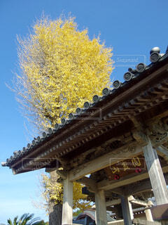 神社のシンボルの写真・画像素材[1702663]