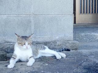 歩道の上に横たわる猫の写真・画像素材[1750725]