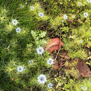 割れた鉢と花の写真・画像素材[1703052]