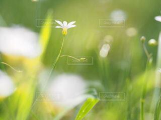 花の写真・画像素材[1711442]