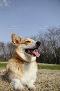 草の上に座って犬対象フィールドの写真・画像素材[1712805]