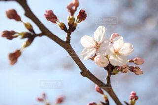 木の枝に花の花瓶の写真・画像素材[1713120]