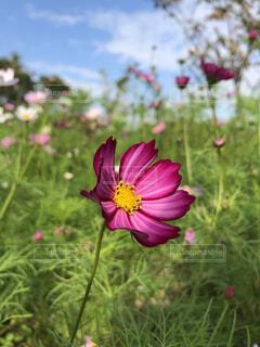 植物にピンクの花の写真・画像素材[1703894]