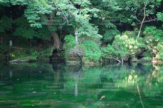 水の池の写真・画像素材[1707176]
