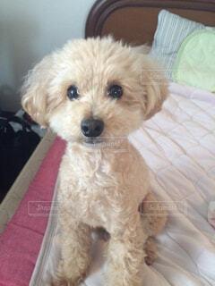 犬の写真・画像素材[213706]
