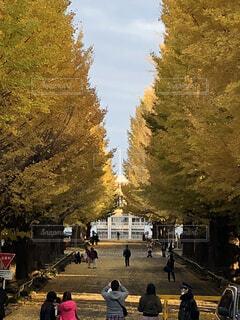 銀杏並木のある道の写真・画像素材[1704284]