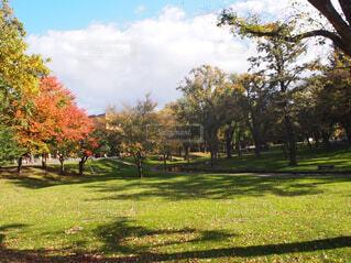 秋の訪れの写真・画像素材[1706731]