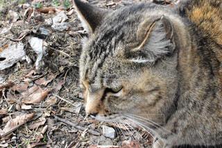 神社にいた猫の写真・画像素材[1704630]
