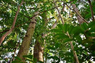 近くの木のアップの写真・画像素材[1704632]
