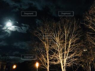 夜空の森の写真・画像素材[1704770]