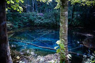 北海道の神の子池の写真・画像素材[1710297]
