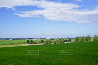 緑豊かな緑の大地の写真・画像素材[1710301]