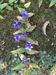 鎌倉にてお花の写真・画像素材[1704791]