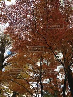 品川区民公園の紅葉の写真・画像素材[1704794]