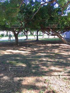 やわらかな木陰の写真・画像素材[1706768]