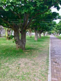 公園の木の写真・画像素材[1716553]