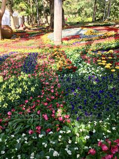 春のお花畑の写真・画像素材[1768381]