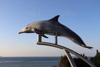 沖縄の美ら海水族館のある海洋博公園で海と空を泳いでいるように見えたイルカ♪の写真・画像素材[3981945]