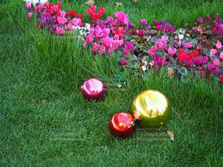 芝生と花とカラフルなボールの写真・画像素材[1705946]
