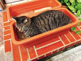 植木鉢の中にいるネコの写真・画像素材[1706148]