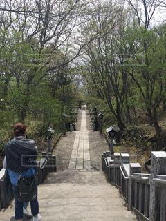 森林の写真・画像素材[59629]