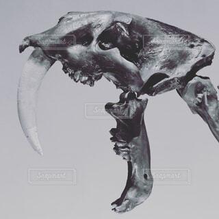 化石の写真・画像素材[1706232]