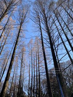 森に迷い込んだ、ある冬の日の写真・画像素材[1706639]