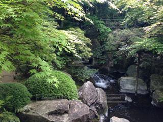 日本庭園の写真・画像素材[1741633]