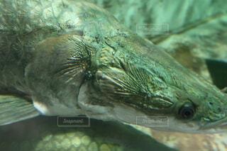 近くに魚のアップの写真・画像素材[1707335]