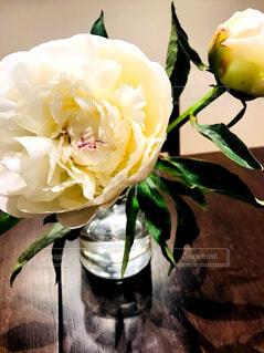 白い美人さんの写真・画像素材[1707613]