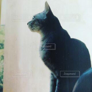 ウィンドウの横に座っている猫の写真・画像素材[1707902]