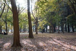 早朝の公園の写真・画像素材[1710122]