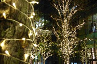 東京、夜、クリスマスの写真・画像素材[1714296]