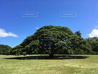 バック グラウンドでモアナルア ・ ガーデンの背景の木の大規模なグリーン フィールドの写真・画像素材[1709092]