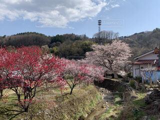 田舎の春の写真・画像素材[2063172]