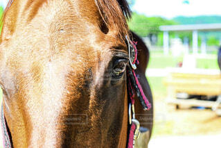 近くに馬のアップの写真・画像素材[1712499]