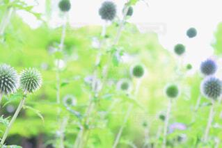 近くの花のアップの写真・画像素材[1712522]